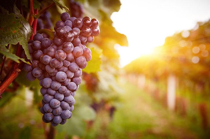 Winogrona a odchudzanie